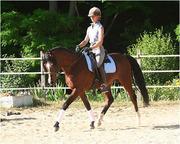 Stunning Mare Arabian Horse